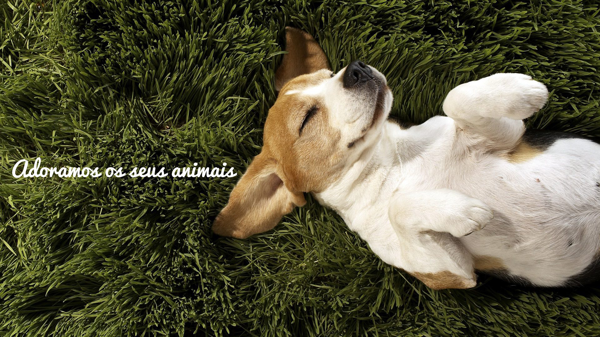 adoramos-seus-animais-02